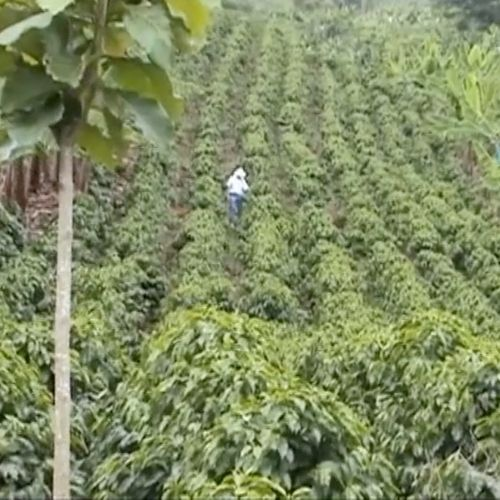 colombian-farms