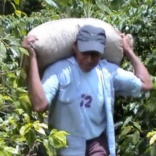 farmers-beans